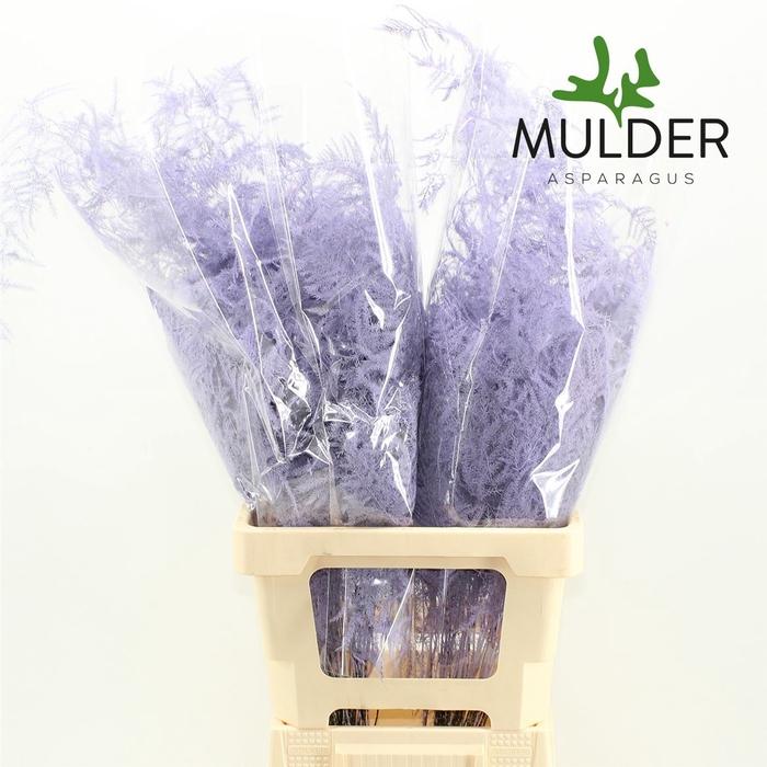 <h4>65cm Extra V. Klb H% Light Violet</h4>
