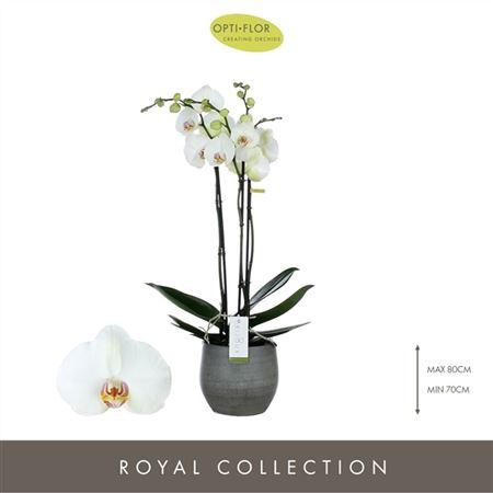 <h4>Bijoux Pearl 3spike In Esra Graphite</h4>