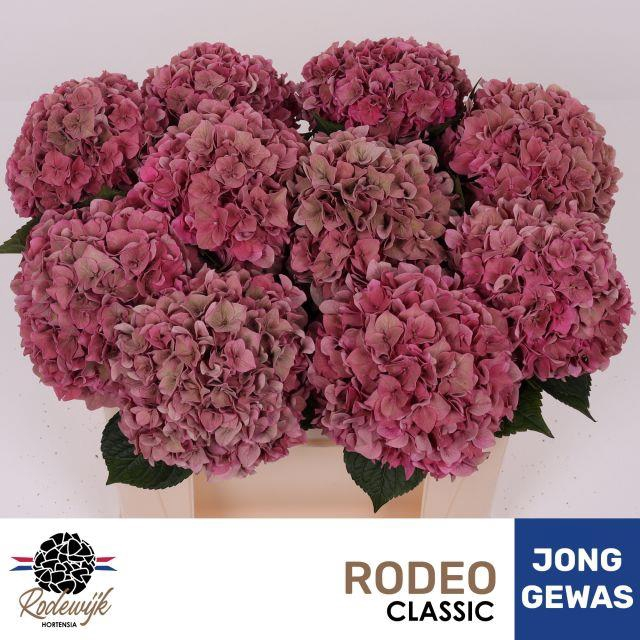 <h4>HYDR M RODEO CL</h4>