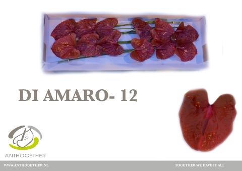 <h4>Anthurium andr. 'Di Amaro'</h4>