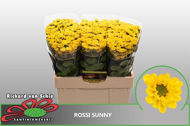 <h4>CHR SAN ROSSI SUNNY</h4>