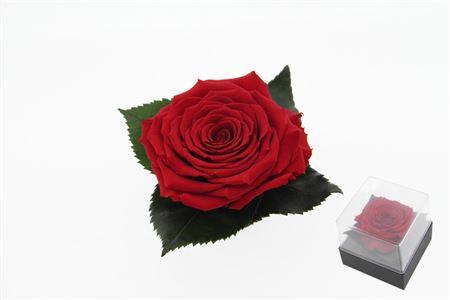 <h4>Pr 9.3 Giftbox Red-02 Xl Gb3</h4>
