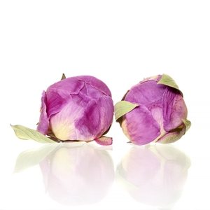 Peony purple 4-4,5cm