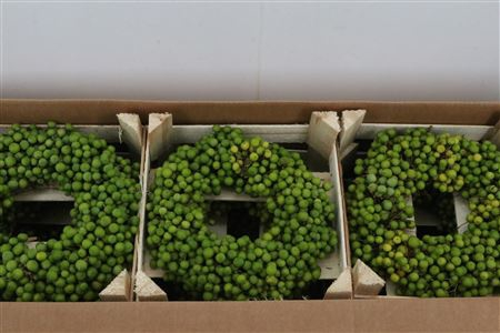 <h4>Wr Krans Sierfruit Lilac De Chine 30 Cm</h4>