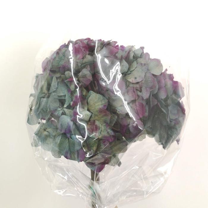 <h4>Hortensia verde y morado preservada</h4>