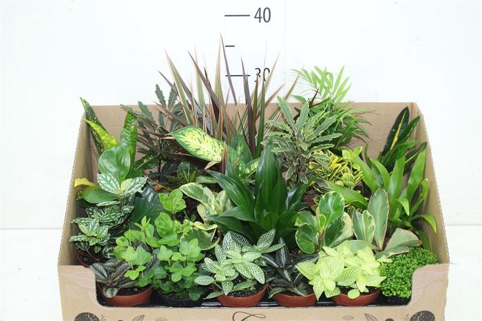 <h4>Plant Mix Mini</h4>