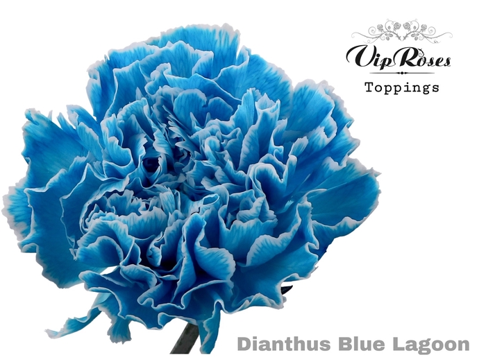 DI ST BLUE LAGOON