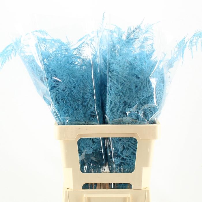 <h4>65cm Extra V. Turquoise</h4>