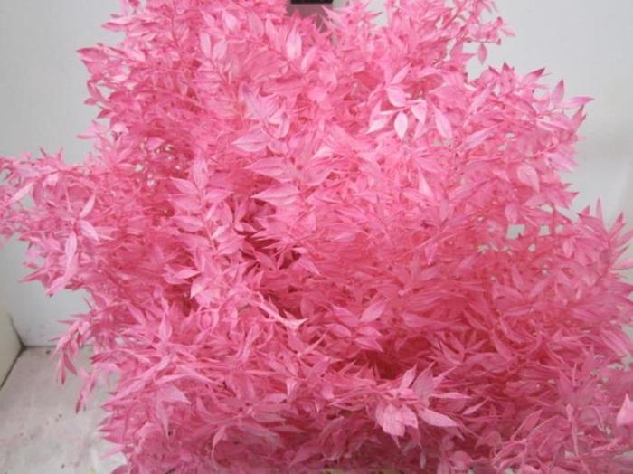 <h4>Ruscus A Gebleekt Pink</h4>