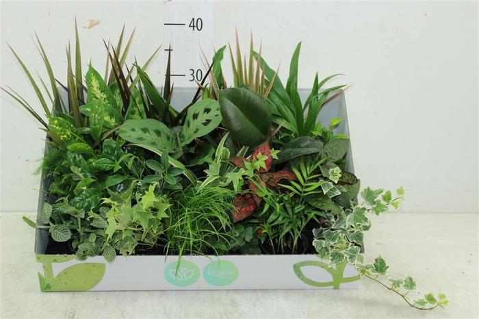 <h4>Plant Mix Mini Greens</h4>