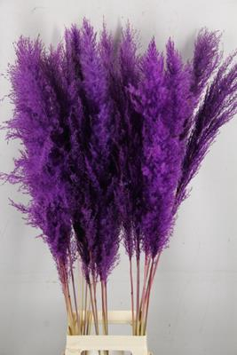 <h4>Df Pampas 140cm Dark Lilac</h4>