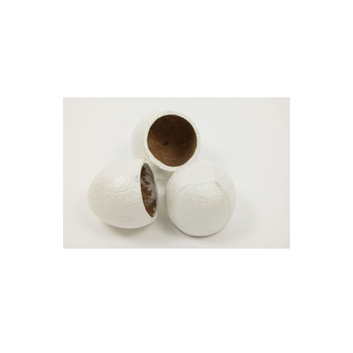 <h4>Sale Coco cup x3</h4>
