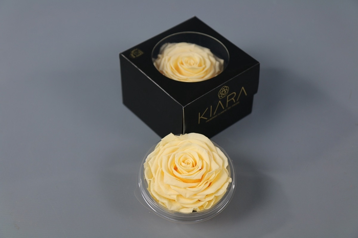 <h4>Rosa Preserved Champagne Solitarie</h4>
