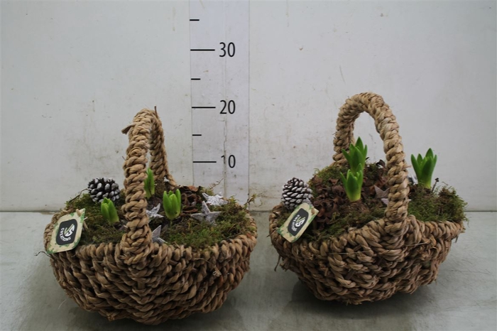 <h4>Hyacinth Wit 147 Hengselmand Ovaal Bruin</h4>