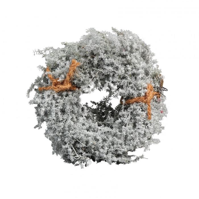 <h4>Wreath d15cm Asparagus wax</h4>