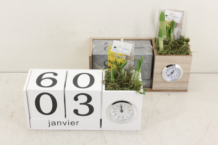 <h4>arr.. Narcis ST1904 - Kalender blok klok</h4>