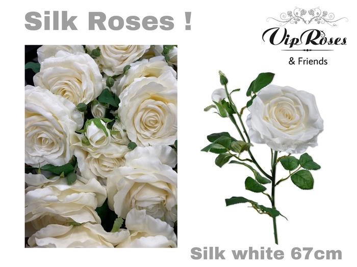 <h4>SILK WHITE</h4>