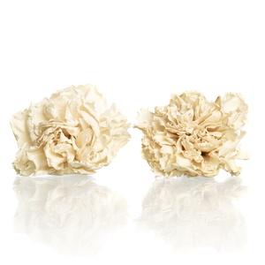 Carnation (anjer) Creme 4,5-5cm