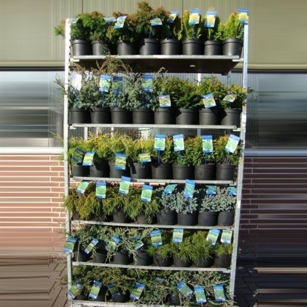 <h4>Coniferen overig gemengd (minimum order one layer)</h4>