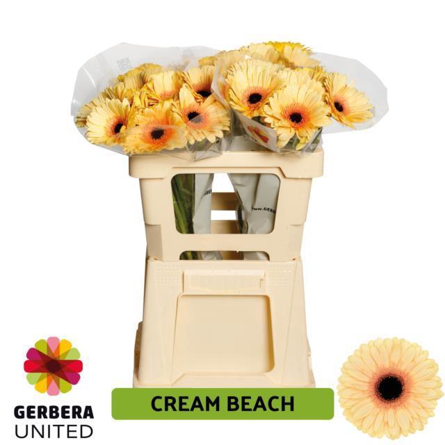 <h4>GE GR Cream Beach water</h4>