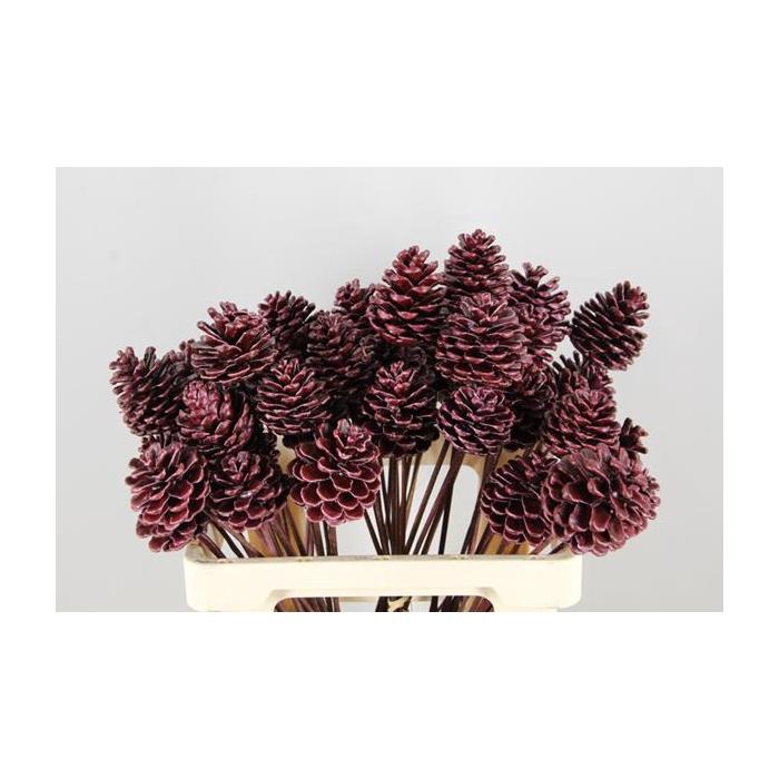 <h4>Stick Pine Cone  Wax Red</h4>