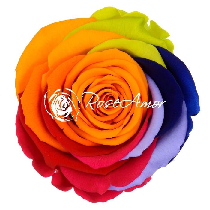 <h4>PRESERVED ROSA LL RAINBOW YEL 04</h4>