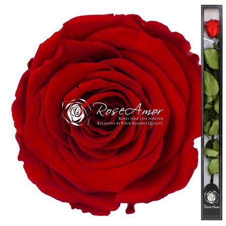 <h4>70cm Stem Red02</h4>
