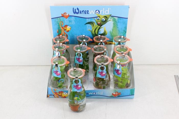 arr. VV - WW Glas bottle mini