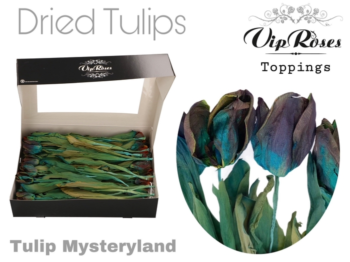 <h4>DRIED VIP TULIPS MYSTERYLAND</h4>