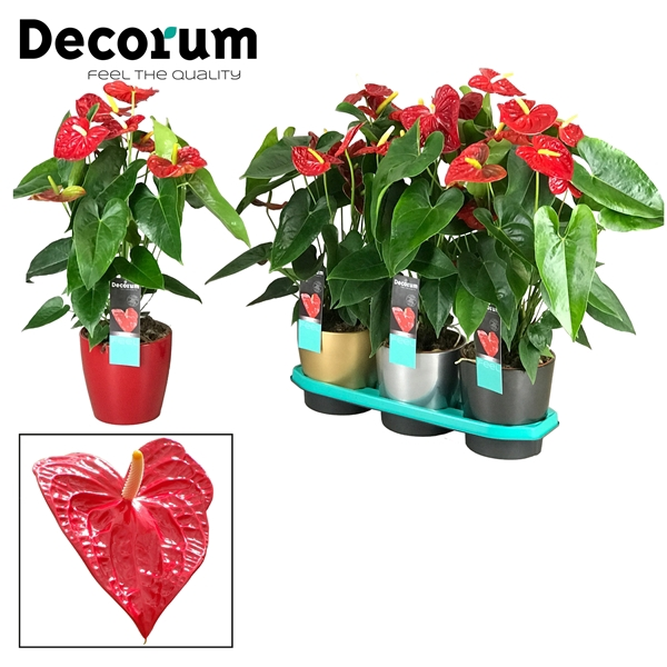 <h4>Anthurium Dakota pot 17 keramiek goud/zilver/antraciet</h4>