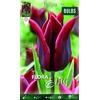 Z Tulipa Lasting Love