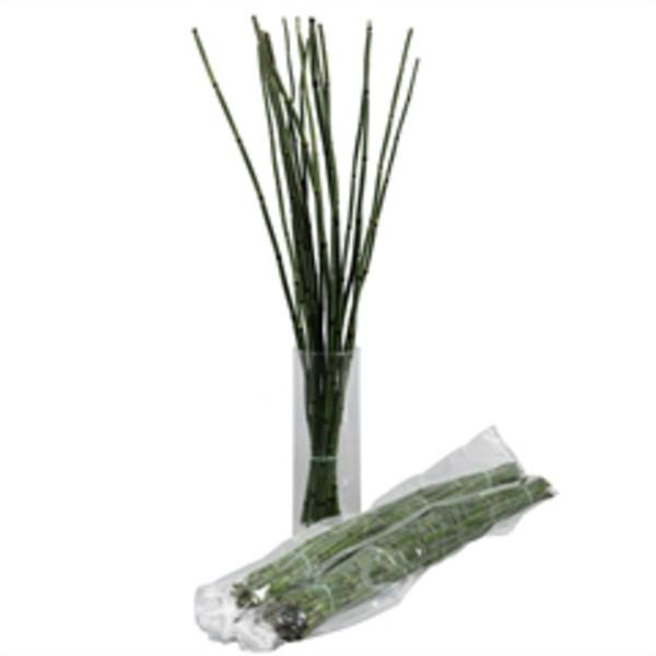 <h4>Bamboe fijn (Siergras)</h4>