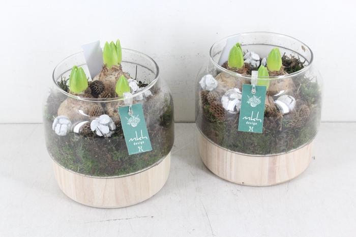 <h4>arr.. Hyacint MK9205 - Glas op hout</h4>