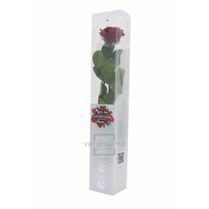 Roos op steel xl Plexi 55cm Burgundy