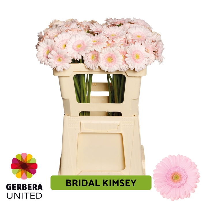 <h4>GE MI Bridal Kimsey</h4>