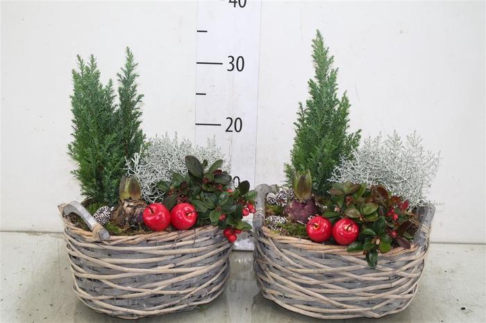 <h4>Arr Tuinplanten In Gevlochte Mand</h4>