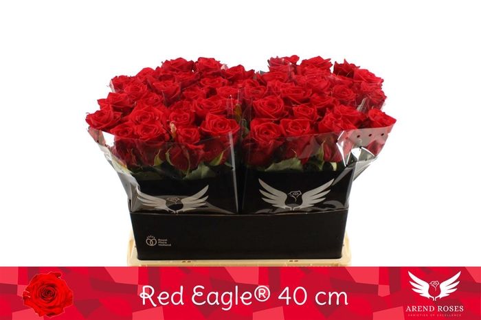 <h4>R Gr Red Eagle</h4>