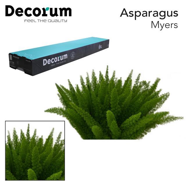 <h4>ASP myers 40cm box dc</h4>