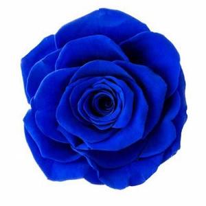 Rose Monalisa Sapphire Blue