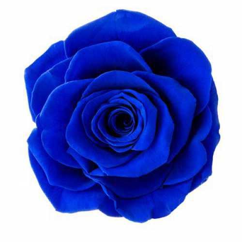 Rose Ava Sapphire Blue