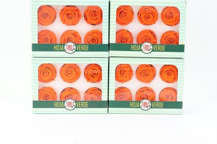 <h4>Preserved Roses Orange</h4>
