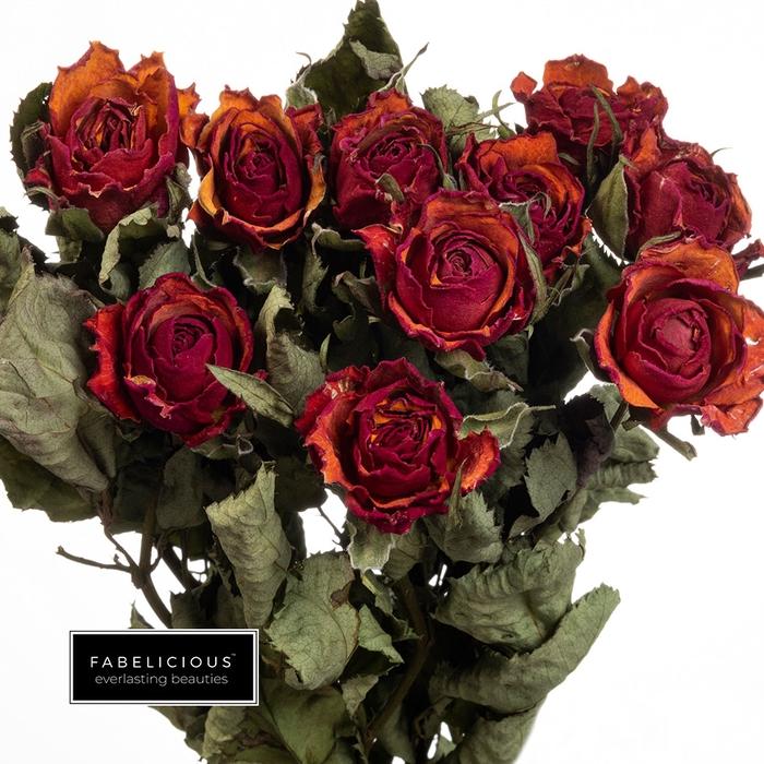<h4>Dried Rosa grootbloemig Julia</h4>