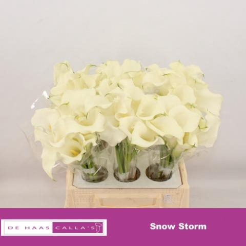 <h4>ZANT SNOW STORM</h4>