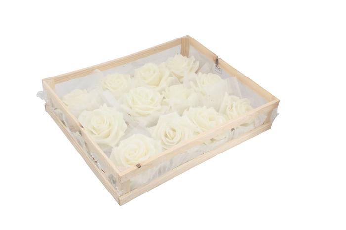 <h4>Wax Rose White</h4>