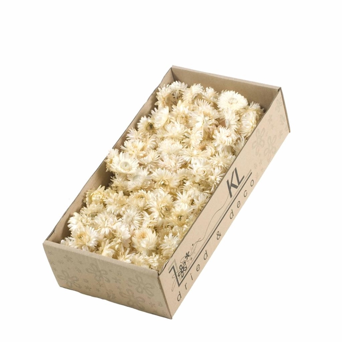 <h4>DRIED FLOWERS - HELICHRYSUM HEADS 100GR WHITE NATURAL</h4>