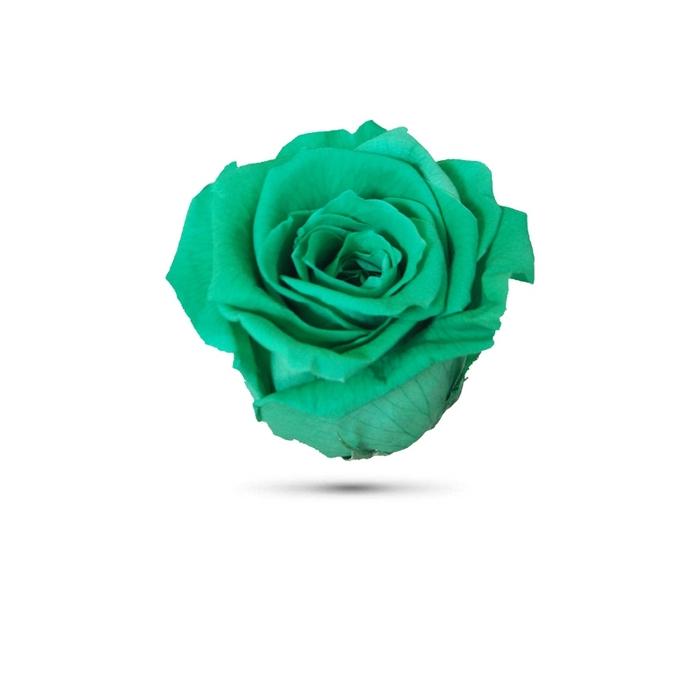 <h4>Rosa preservada cabeza verde agua</h4>
