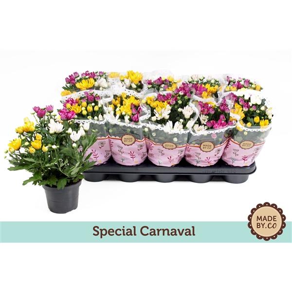 <h4>Chrysanthemum carnaval</h4>