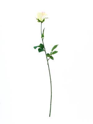 <h4>Af Rose Camelot 74cm Creampink</h4>