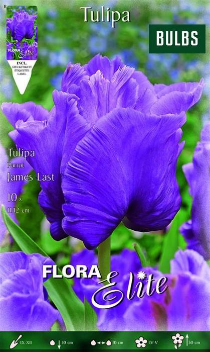 <h4>Z Tulipa Parrot James Last</h4>