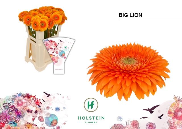 <h4>GE GBV hoes Big Lion</h4>